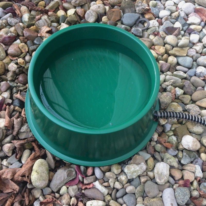 Farm Innovators Heated Pet Bowl Green